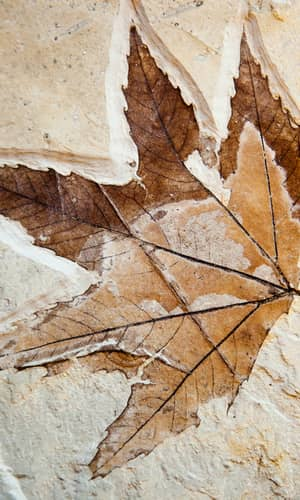 The Challenge of Fossil Forests for Creationist Research