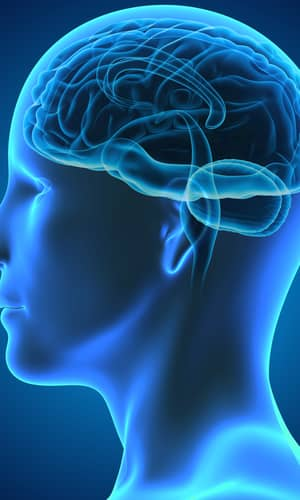 What Makes Us Human, and Why It Is Not the Brain: A Creationist Defense of the Soul: Reply