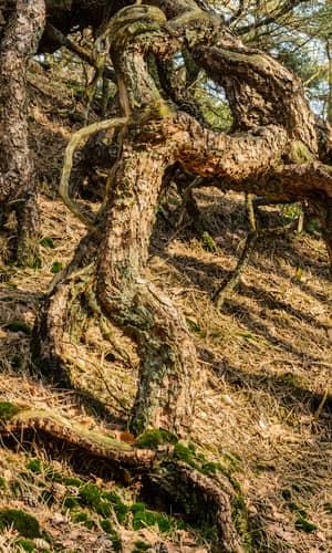 Toward An Understanding of Arbuscular Mycorrhizal Fungi