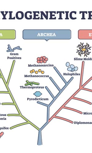 Using Taxonomically Restricted Essential Genes to Determine Whether Two Organisms Can Belong to the Same Family Tree