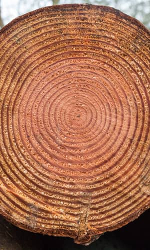 Do Varves, Tree-Rings, and Radiocarbon Measurements Prove an Old Earth?