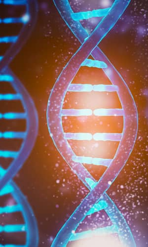 """Reply to """"Response to 'On the Creationist View on mtDNA'."""""""