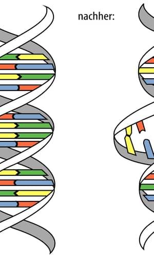 Towards a Creationary Classification of Mutations