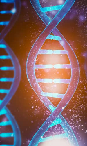"""Response to  """"Reply to 'Response to 'On the Creationist View on mtDNA'."""""""
