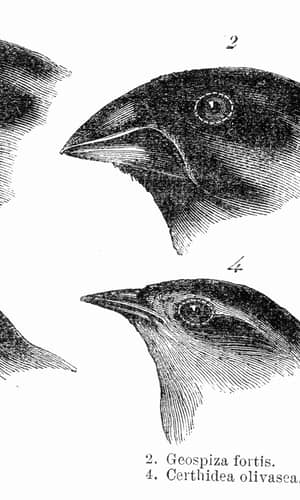"""A Response to """"Does Natural Selection Exist?"""": Creatures' Adaptation Explained by the Design-based, Organism-driven Approach: Part 3"""