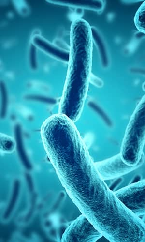 Microbes and the Days of Creation