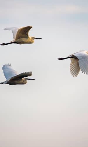 An Initial Estimate of Avian Ark Kinds