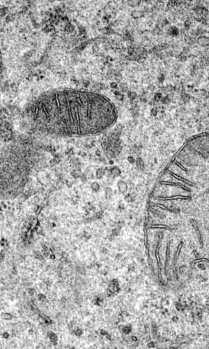 Recent, Functionally Diverse Origin for Mitochondrial Genes from ~2700 Metazoan Species
